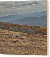 Fall Scene On Whitetop Mountain Va Wood Print