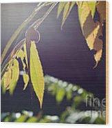 Fall Sumac Wood Print