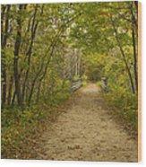 Fall Trail Scene 23 Wood Print