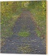 Fall Trail Scene 30  Wood Print