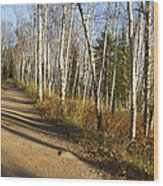Fall Trail Scene 35 A Wood Print