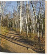 Fall Trail Scene 35 B Wood Print
