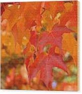 Fall Tree Leaves Art Prints Orange Red Autumn Wood Print