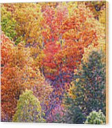 Fall Trees 3 Wood Print
