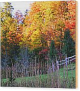 Fall Trees And Fence Wood Print