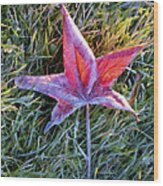 Fallen Autumn Leaf In The Grass During Morning Frost Wood Print