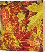 Fallen Autumn Maple Leaves  Wood Print