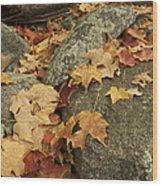 Fallen Autumn Sugar Maple Leaves Wood Print