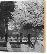 Fallen - Black And White Wood Print
