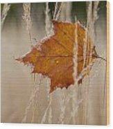 Fallen Color Wood Print