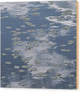 Fallen Leaves And Reflections Of Clouds Wood Print
