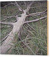 Fallen Pine Tree Wood Print