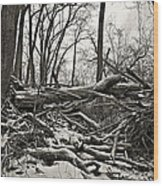 Fallen Soldiers Of The Forest Wood Print