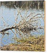 Fallen Tree Wood Print by Douglas Barnard