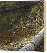Fallen Tree Path Wood Print