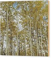 Falling For The Birch And Aspens Wood Print
