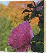 Fall's Final Rose Wood Print