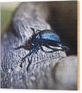 False Darkling Beetle 30 Wood Print