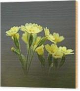 False Oxlip (primula Veris X Vulgaris) Wood Print