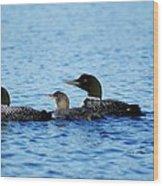 Family Swim 3 Wood Print