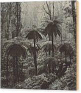 Family Walking Through A Forest Of Tree Wood Print