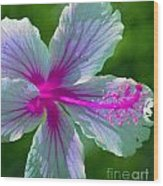 Fanciful Hibiscus Wood Print