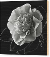 Fancy Camellia In Black And White Wood Print