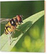 Fancy Fly Wood Print