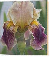 Fancy Iris Dance Ruffles Wood Print