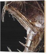 Fangtooth Fish Wood Print