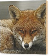 Fantastic Mr Fox Wood Print by Jacqui Collett
