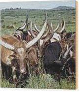 Fantastically Long-horned Ankole Cattle Wood Print