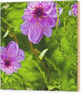 Fantasy Pink Dahlia Wood Print