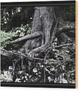 Fantasy Roots Wood Print