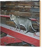 Farm Cat Wood Print