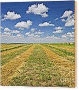 Farm Field At Harvest In Saskatchewan Wood Print