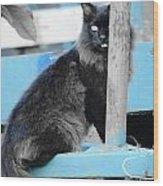 Farm Kitty On Blue Wagon Wood Print