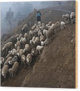 farmers bring their sheep to graze. Republic of Bolivia. Wood Print
