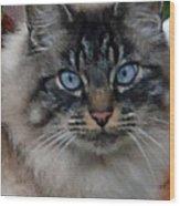 Fat Cats Of Ballard 9 Wood Print