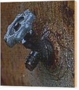 Faucet Wood Print by Wilma  Birdwell