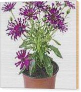 Favourite Violet Indoor Flower Wood Print