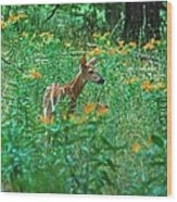 Fawn In A Field Of Milkweed Wood Print