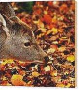 Fawn In Autumn Wood Print