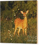 Fawn In Forest At Dusk Wood Print