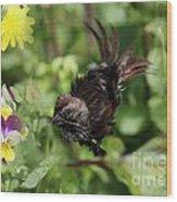Feather Flash Wood Print
