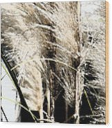 Feather Grass Wood Print
