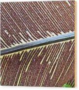 Feather Or Fern Wood Print