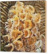 Featherduster Wood Print