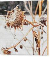 February Sunflower Wood Print