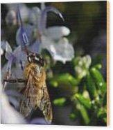 Feeding Bee Wood Print